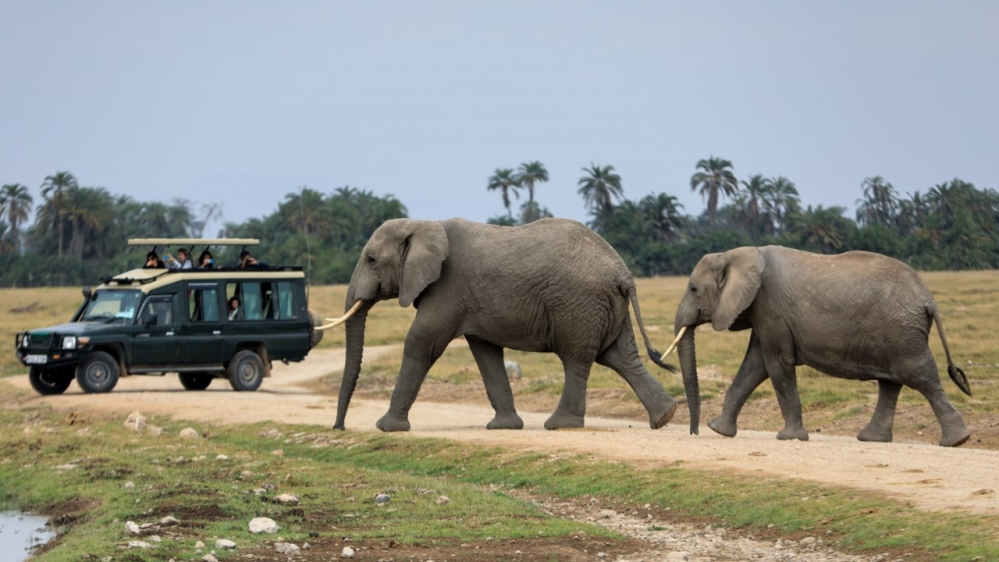 Humans behind 70% fall in world's wildlife over last 50 years